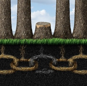 Bank Compliance Blog - Getting to the Root of the Problem